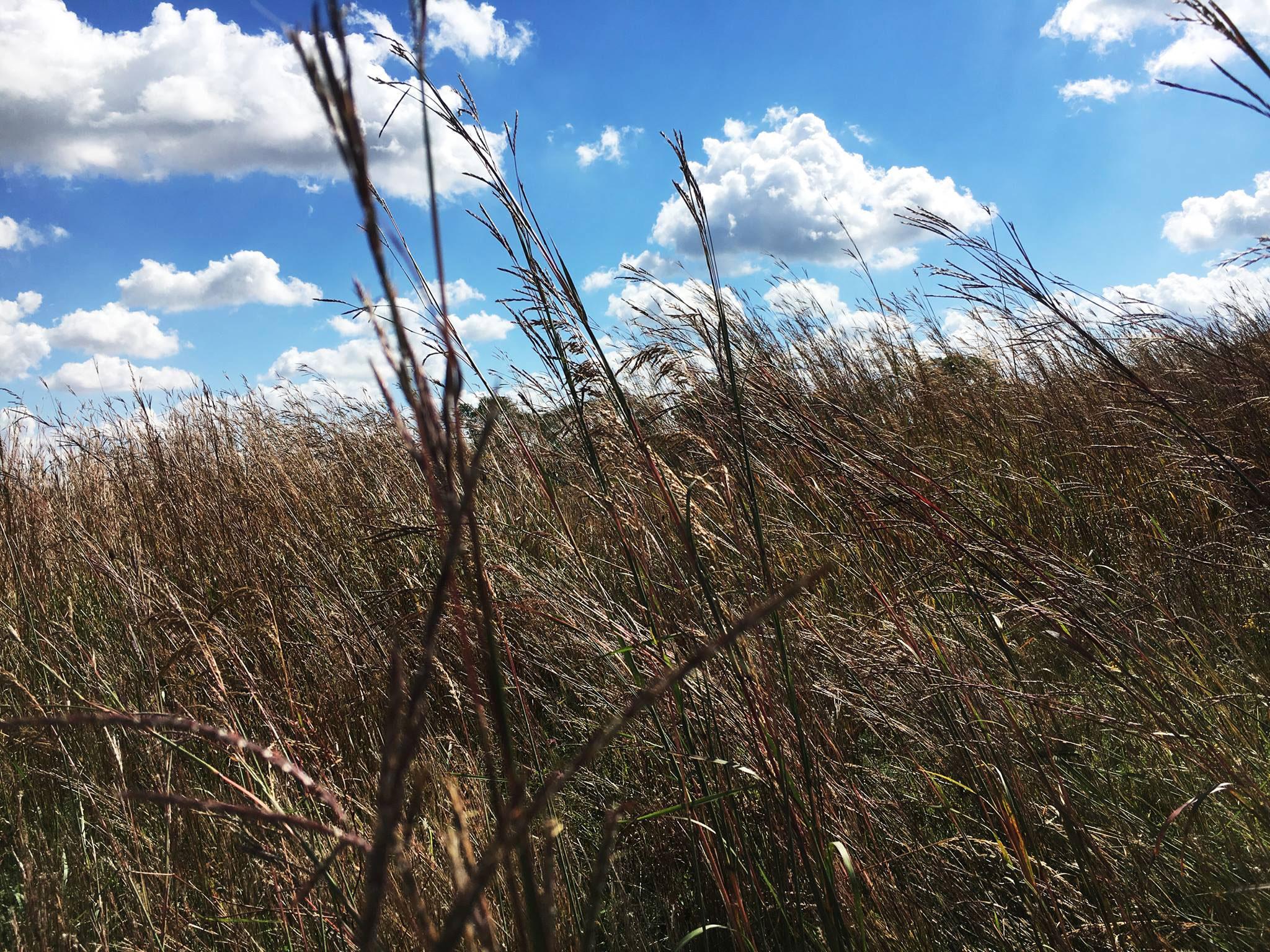 Saving America's Broken Prairie